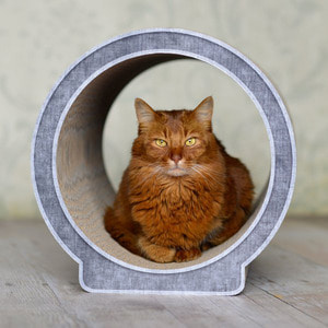 CAT-ON Le Rond (디자인 랜덤 발송)